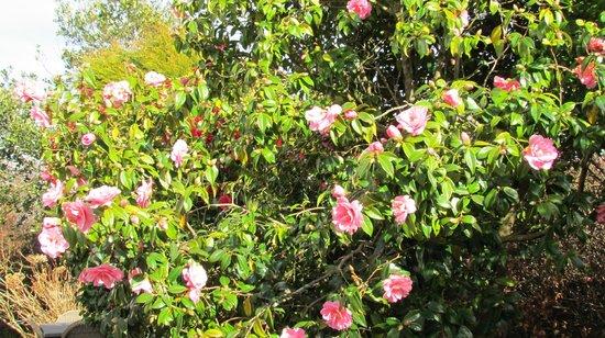 Dovers House : Our Garden