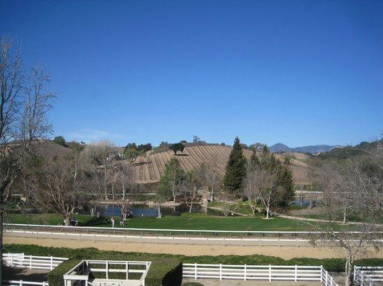 Bridlewood Estate Winery: ブドウ畑