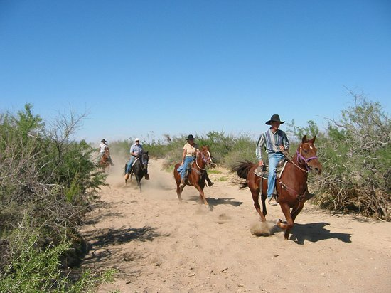 Stagecoach Trails Guest Ranch : Horseback riding in the sandy washes