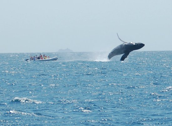 Rissalena Cruises : Whales every year!