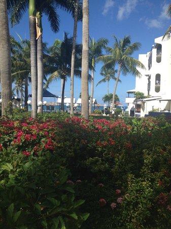 Flamingo Beach Resort: Grounds...