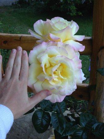 Hotel Tronador: Tamaño proporcional al perfume y cantidad por planta