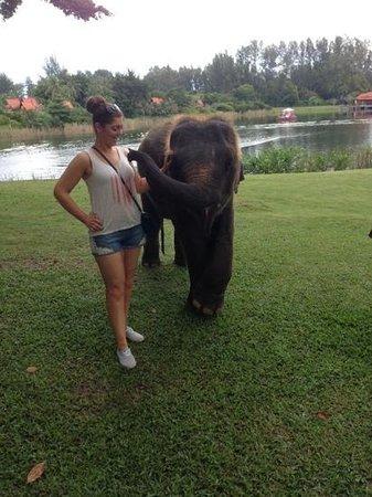 """Banyan Tree Spa Phuket: """"Lucky"""" Banyan Tree's Baby Elephant"""