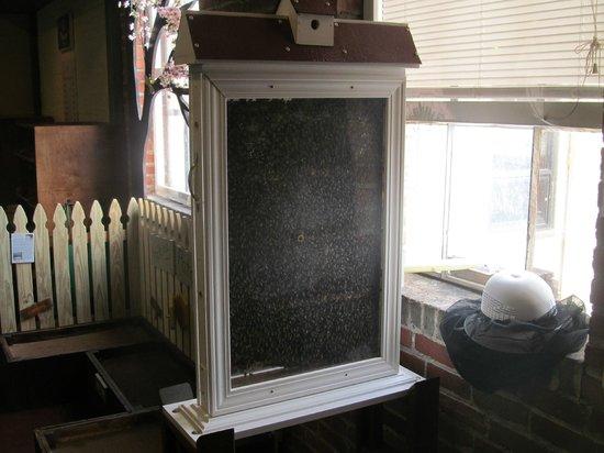 Virginia Discovery Museum: Beehive