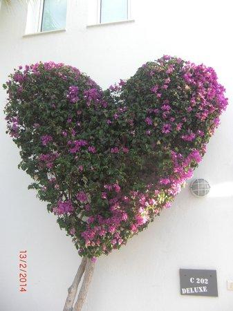 Marina Bayview: Nydelig beplantning