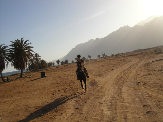 Dahab Horse Riding Club: Late afternoon gallop on Zack