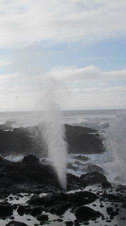 Yachats coastline: Spouting horn on Yachats Ocean Road