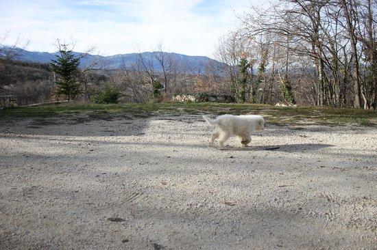 Agriturismo Tholos: cucciolo di pastore abruzzese