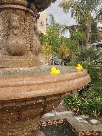 Avila La Fonda Hotel : A couple free loaders taking a dip in our fountain!