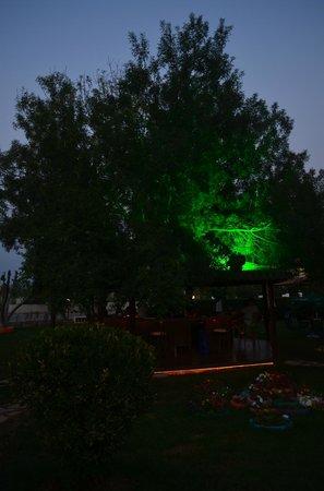Asena Motel: Another of the garden/bar