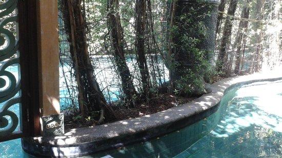The Baray Villa: backyard