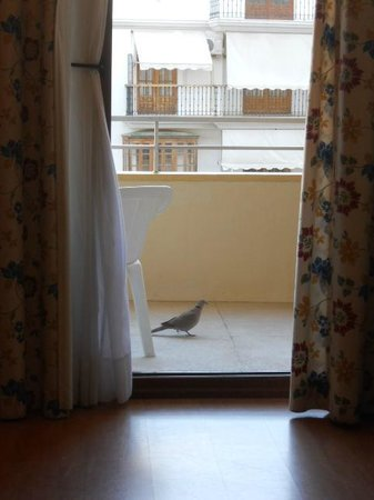 Gran Cervantes by Blue Sea: bird visits