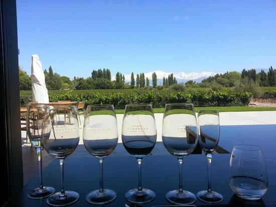 Casarena Bodega y Vinedos: Sentado de frente para o vinhedo, Cordilheira ao fundo