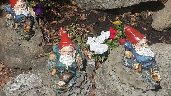 Cavernas del Viejo Volcan Parque Cerro Leones: Bosque de los duendes y hadas