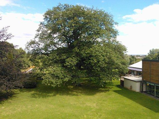 Newpark Hotel: Garden View of Tree!