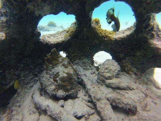 Playa Porto Marie : Foto embaixo da água