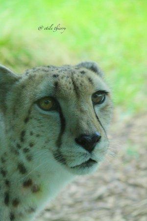 Auckland Zoo : Même pas peur