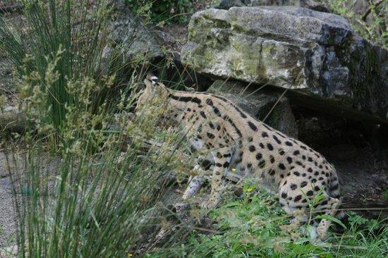 Auckland Zoo : il cherche ??