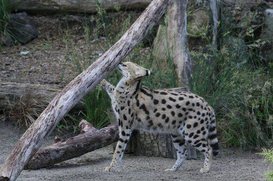 Auckland Zoo : Trop jolie