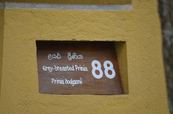 Amaya Lake: each room had a name