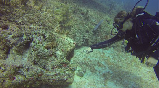 Sea Pro Divers: Maddy spotted a hiding crustacean