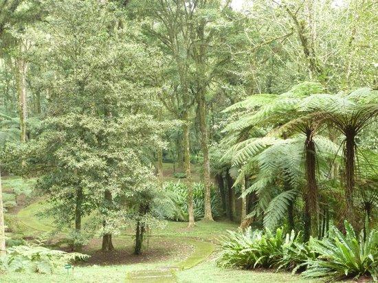 Kebun Raya Botani Bali : well maintained paths