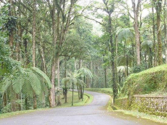Kebun Raya Botani Bali : good roads but little traffic or noise.
