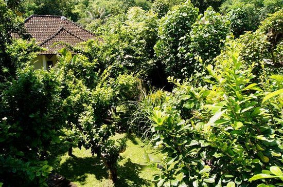Joli Homestay: Our beautiful garden from above. It's like being in the jungle :D