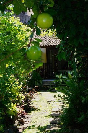 Joli Homestay: One of the many fruit trees in our garden.