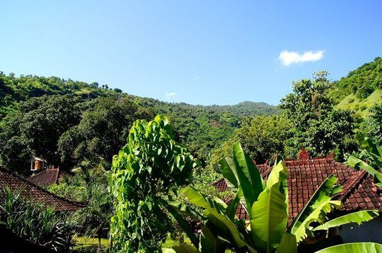 Joli Homestay: A view into the surrounding area. Go for a walk in the jungle and enjoy.