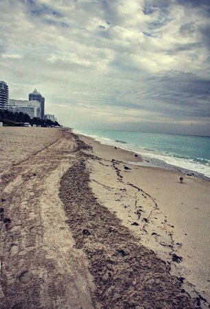 Holiday Inn Miami Beach : Holiday Inn Beach