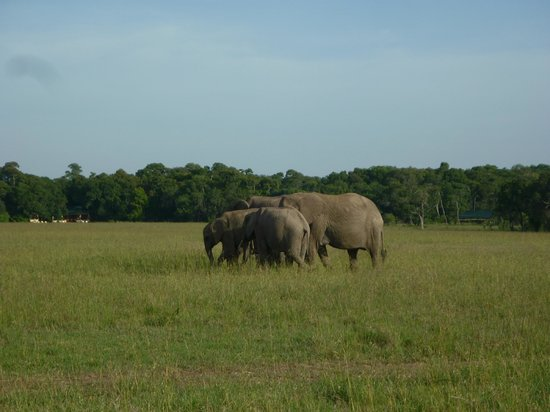 Elephant Pepper Camp: Elephants in front of Elephant Pepper