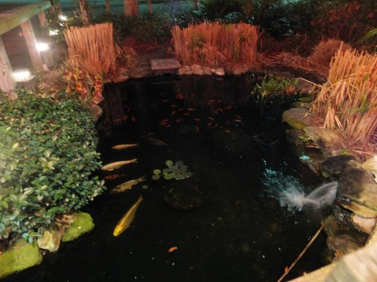 Uncle Bubba's Oyster House : Fish pond in front of restaurant