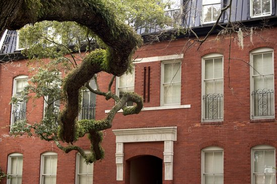Capturing Savannah - Photography Tours : Live oak branch in Pulaski Square