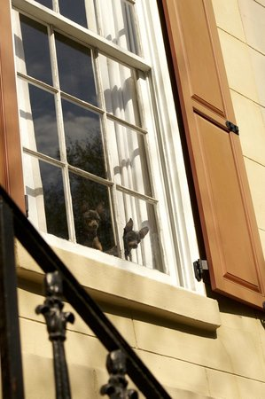 Capturing Savannah - Photography Tours : Who's watching who?
