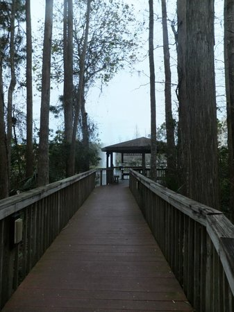 Vacation Village at Parkway: wooded path