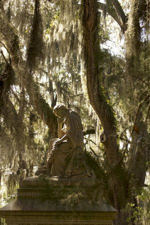 All About Savannah Tours: Memorial in moss