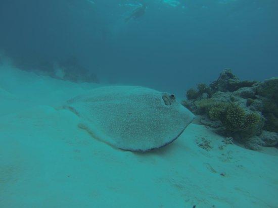 Narnia Maldives