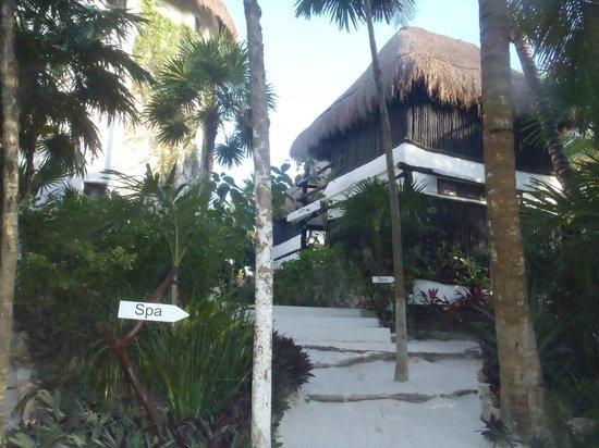Coco Tulum : path