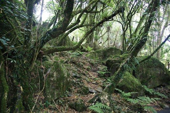 Hairy Feet Scenic Film Location Tour Waitomo: Forest