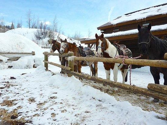 Vista Verde Guest Ranch : Horses