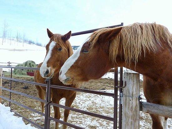 Vista Verde Guest Ranch : kissing horses