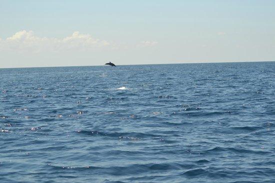 Finca Maresia : dauphin lors de la sortie a isla cano