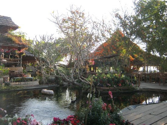 Phu Chaisai Mountain Resort : บ่อปลา