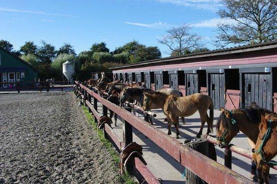 Espace Equestre de l'Etrier