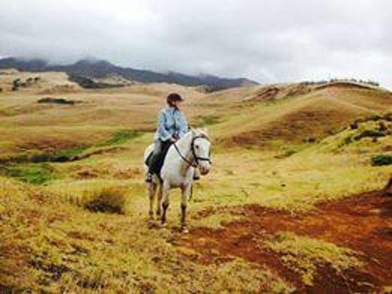 Wildcoast Ruapuke Horse Riding: Del on Tonka