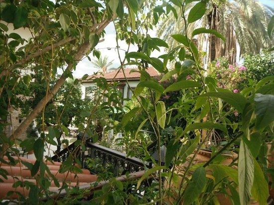 Dogan Hotel : Hotel garden