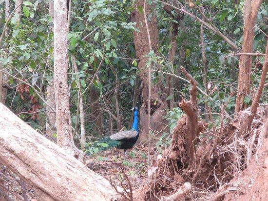 Panthnivas Panchalingeswar: In Kuldiha Forest