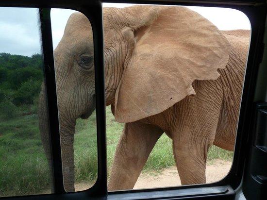 Alan Tours: ...so viel zu unserer Frage, wie nahe kommen denn die Tiere?