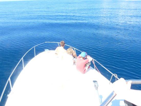 Mermaid's Secret - Riverside Retreat : Whale watching